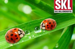 Doppeltes Glück beim SKL-Millionen-Montag