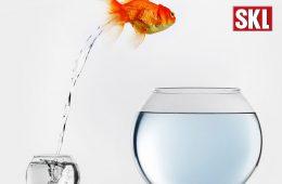 Goldfisch springt aus Glas