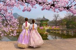 Kirschblüte in Südkorea mit traditioneller Kleidung